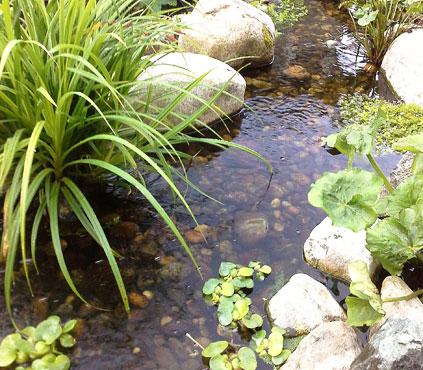 Water pond feature